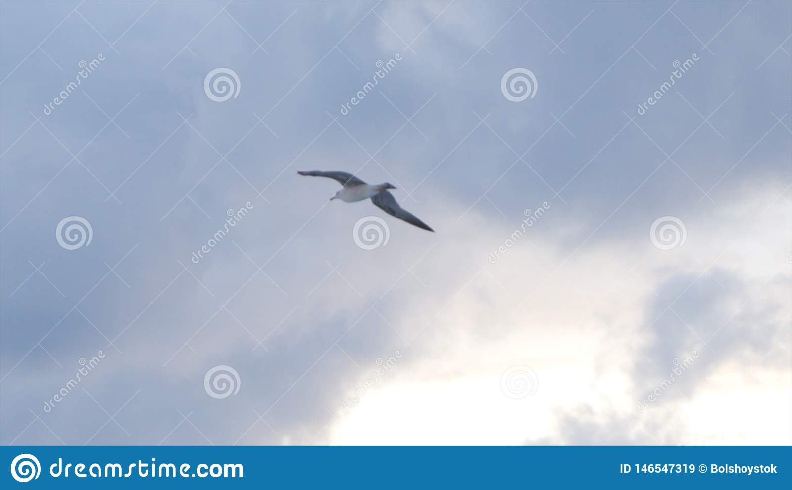 Летание чайки в воздухе на пасмурной предпосылке неба захода солнца, концепции свободы r Красивая белая птица парящая над