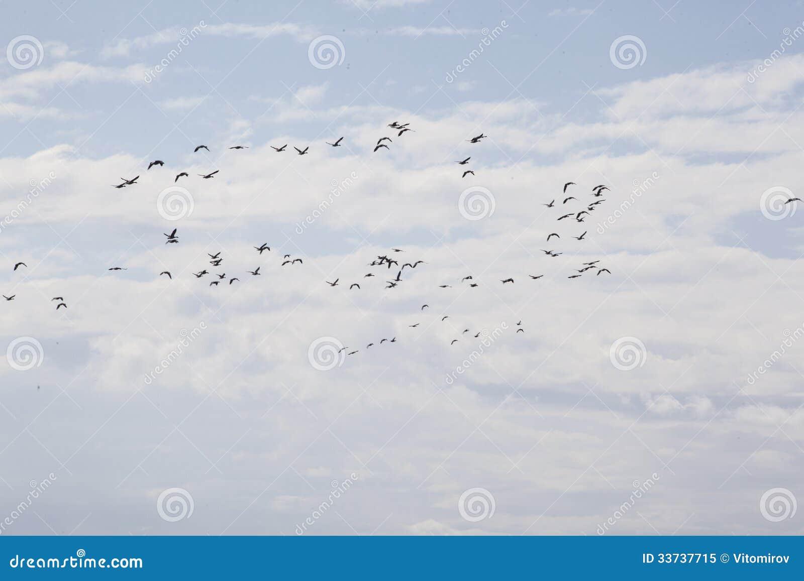 Летать птиц
