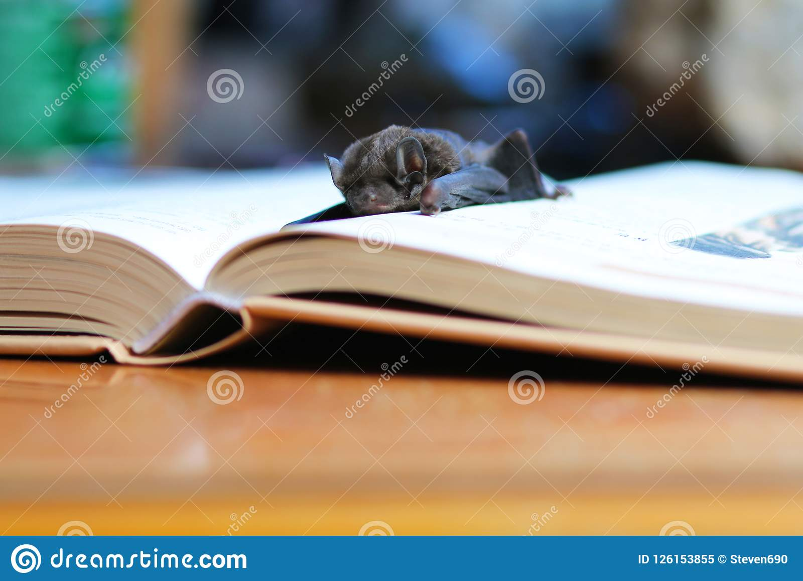 Летучая мышь на книге
