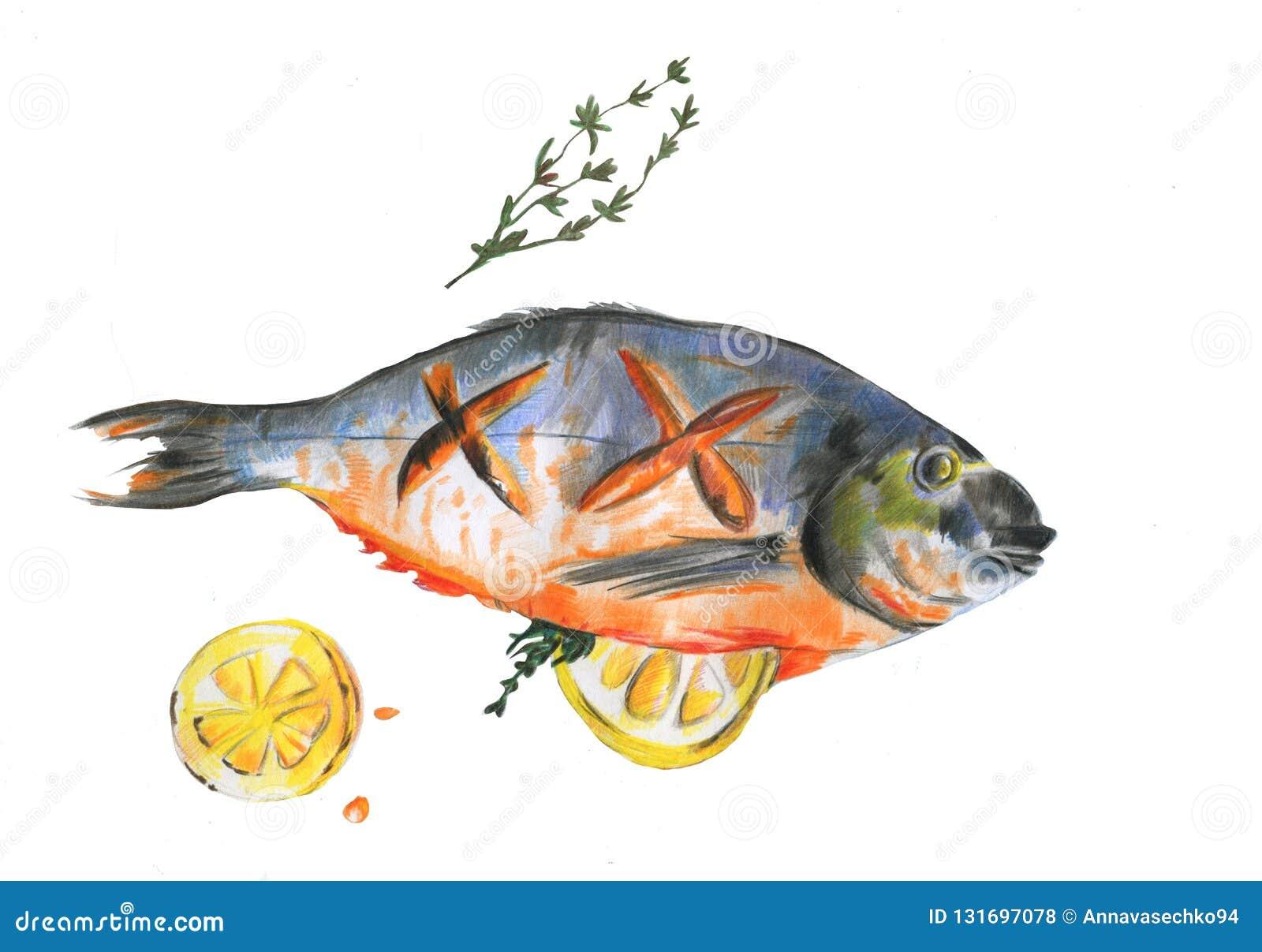 Лещ моря рыб акварели сваренный с куском лимона и розмаринового масла на белой предпосылке