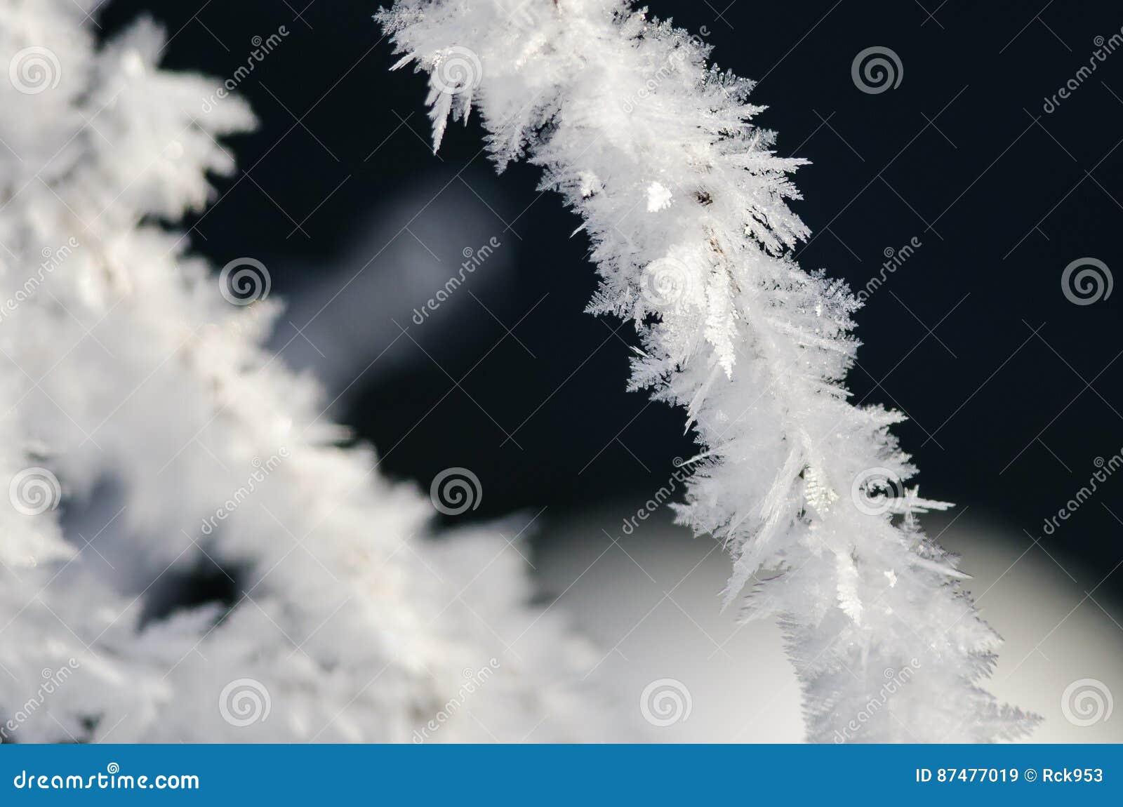 Ледистые кристаллы Frost льнуть к замороженной листве зимы