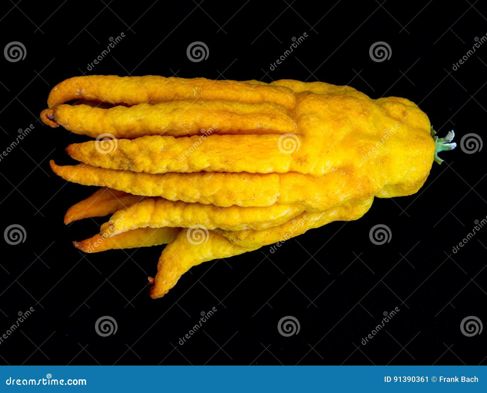 Лимон цитруса cedrat руки Buddhas