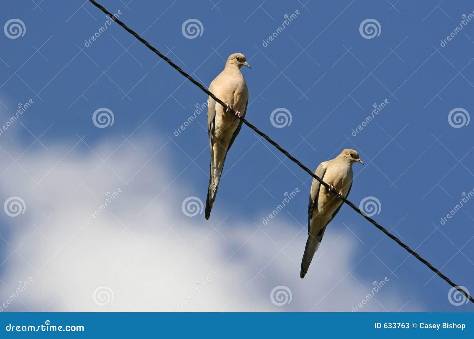 Download линия 2 голубей стоковое изображение. изображение насчитывающей dove - 633763