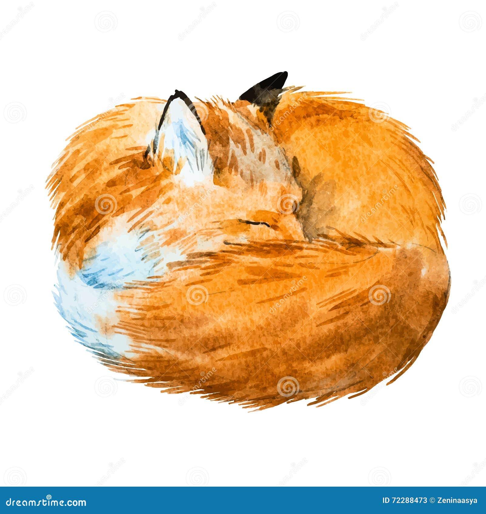 Download Лиса спать акварели иллюстрация вектора. иллюстрации насчитывающей идти - 72288473