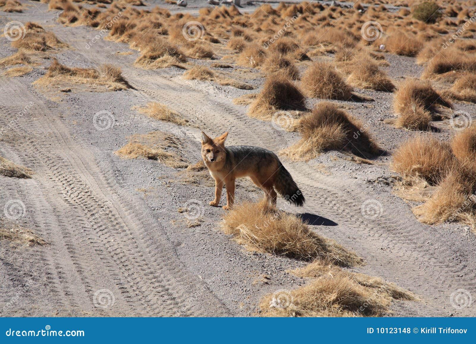лисица Боливии