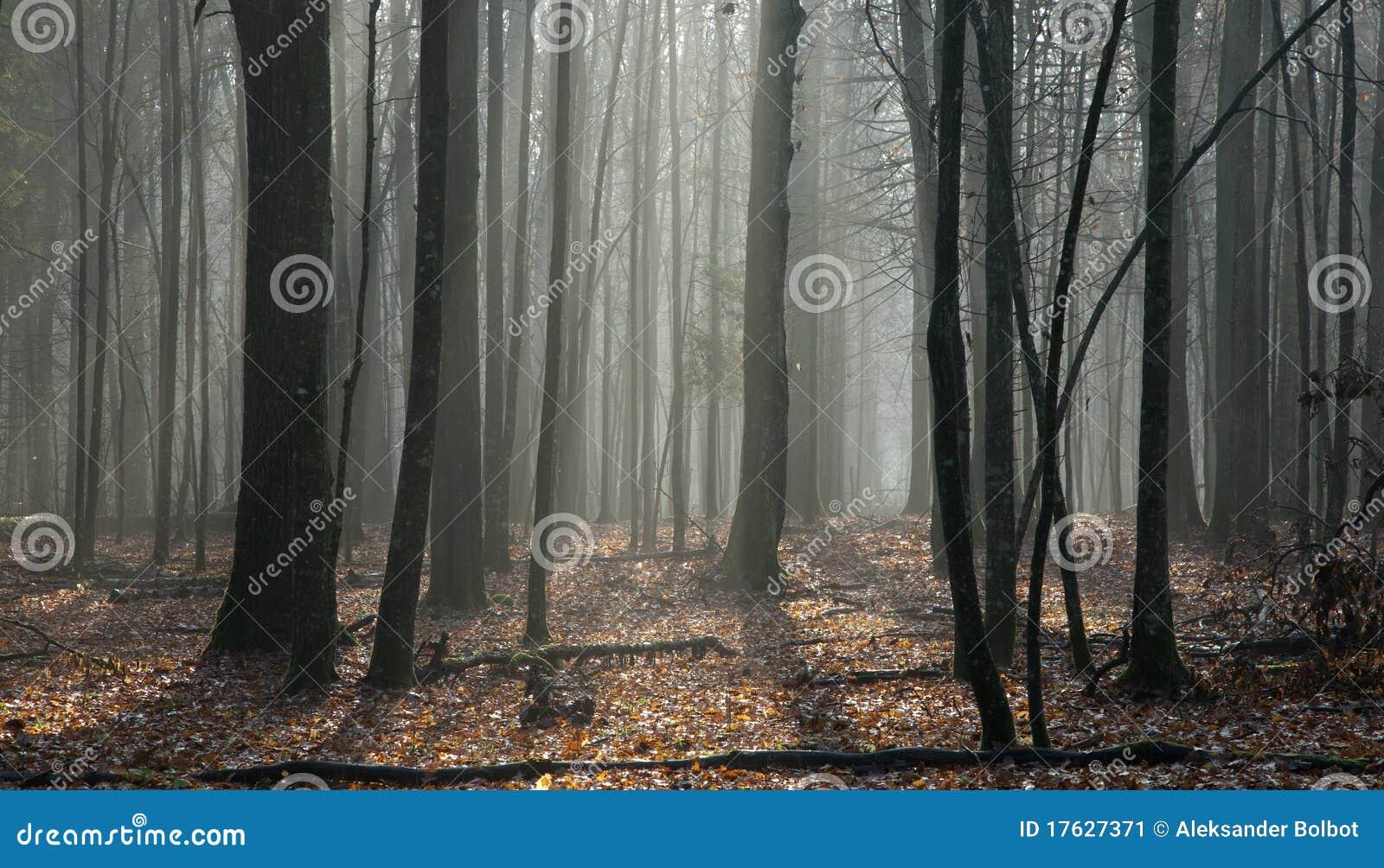 лиственная предыдущая стойка весеннего времени