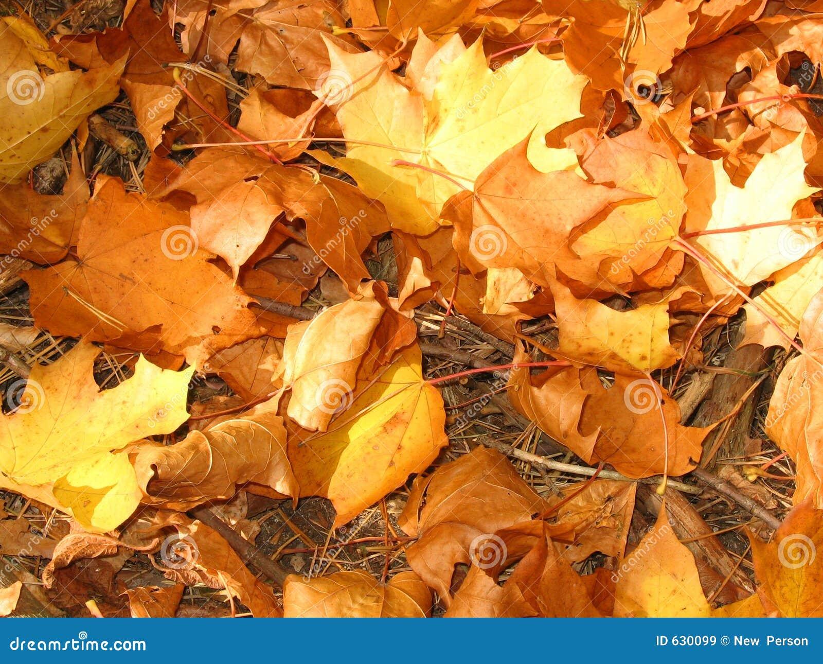 Download листовые золота стоковое изображение. изображение насчитывающей прервано - 630099