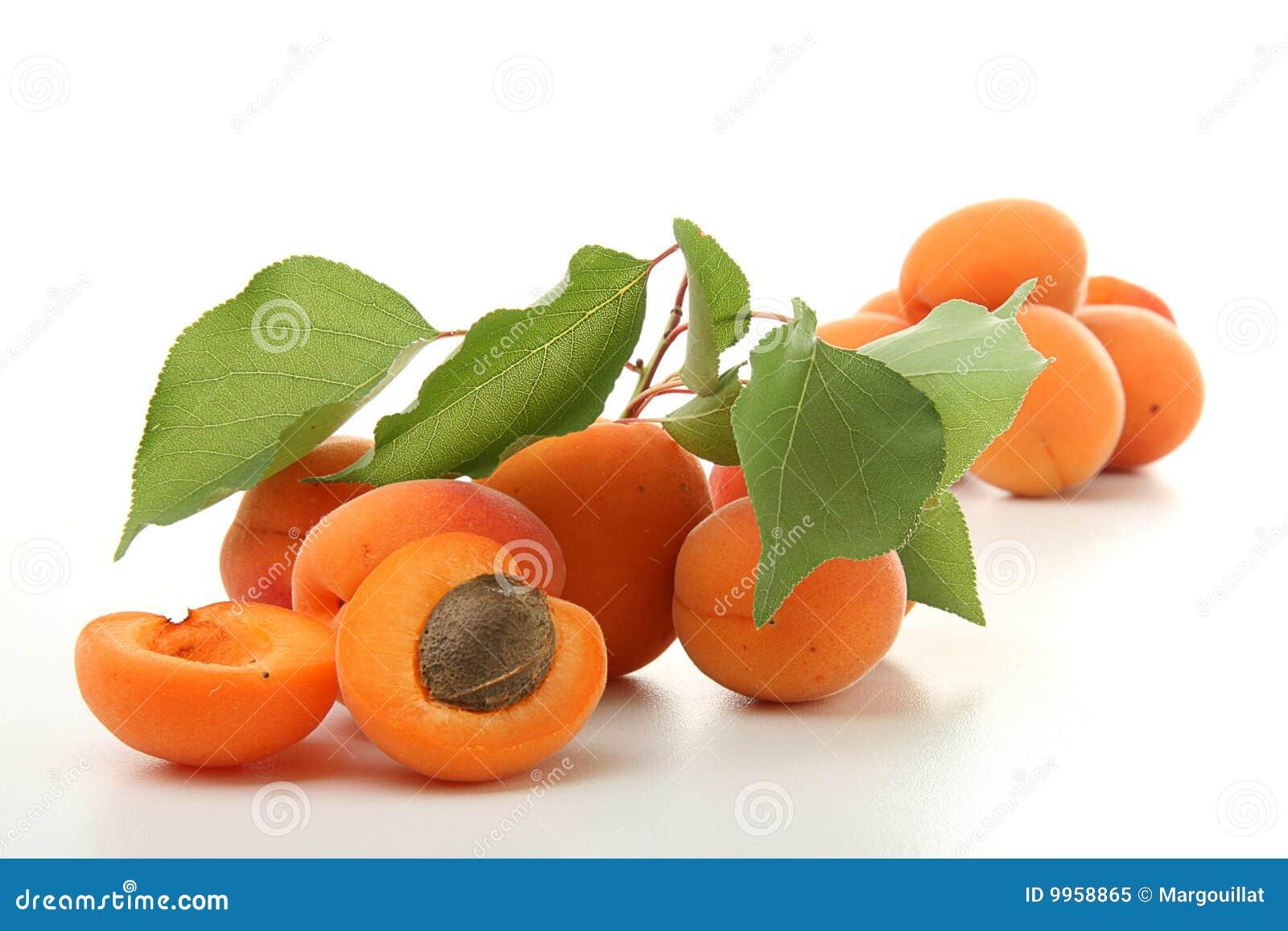 лист абрикоса фото