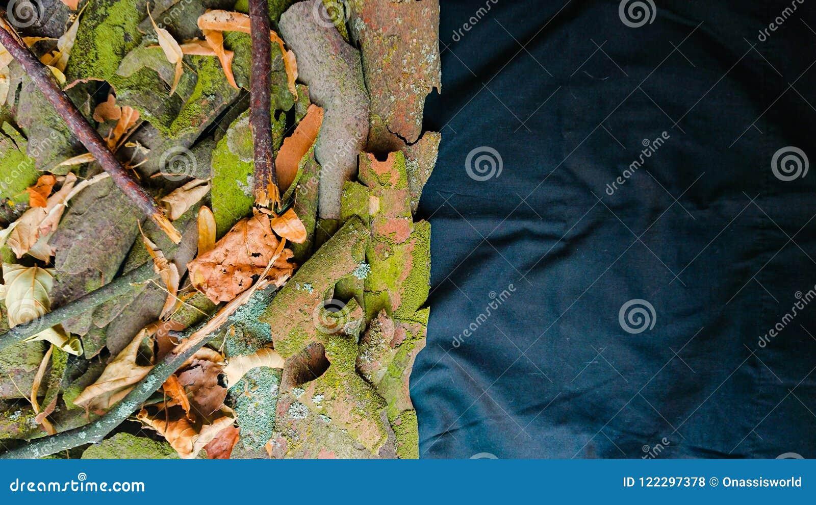 Листья, ветви и кора дерева предпосылки природы