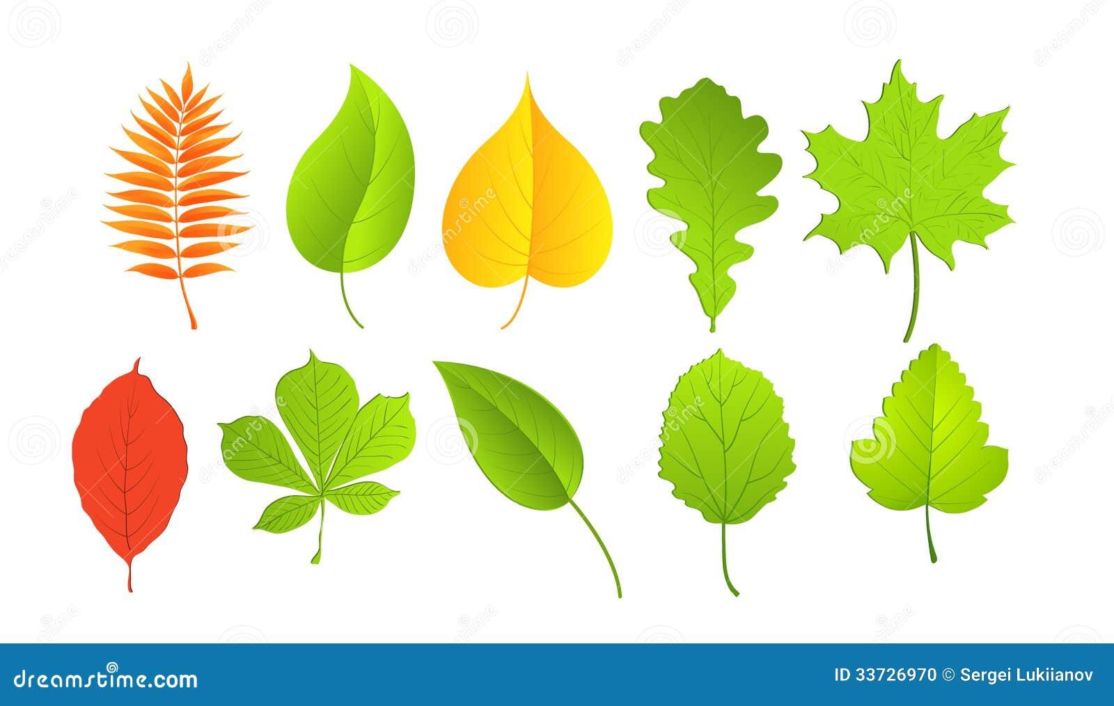 Листья в зеленых и желтых цветах