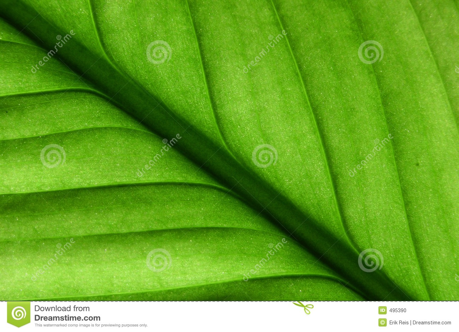 листья деталей зеленые
