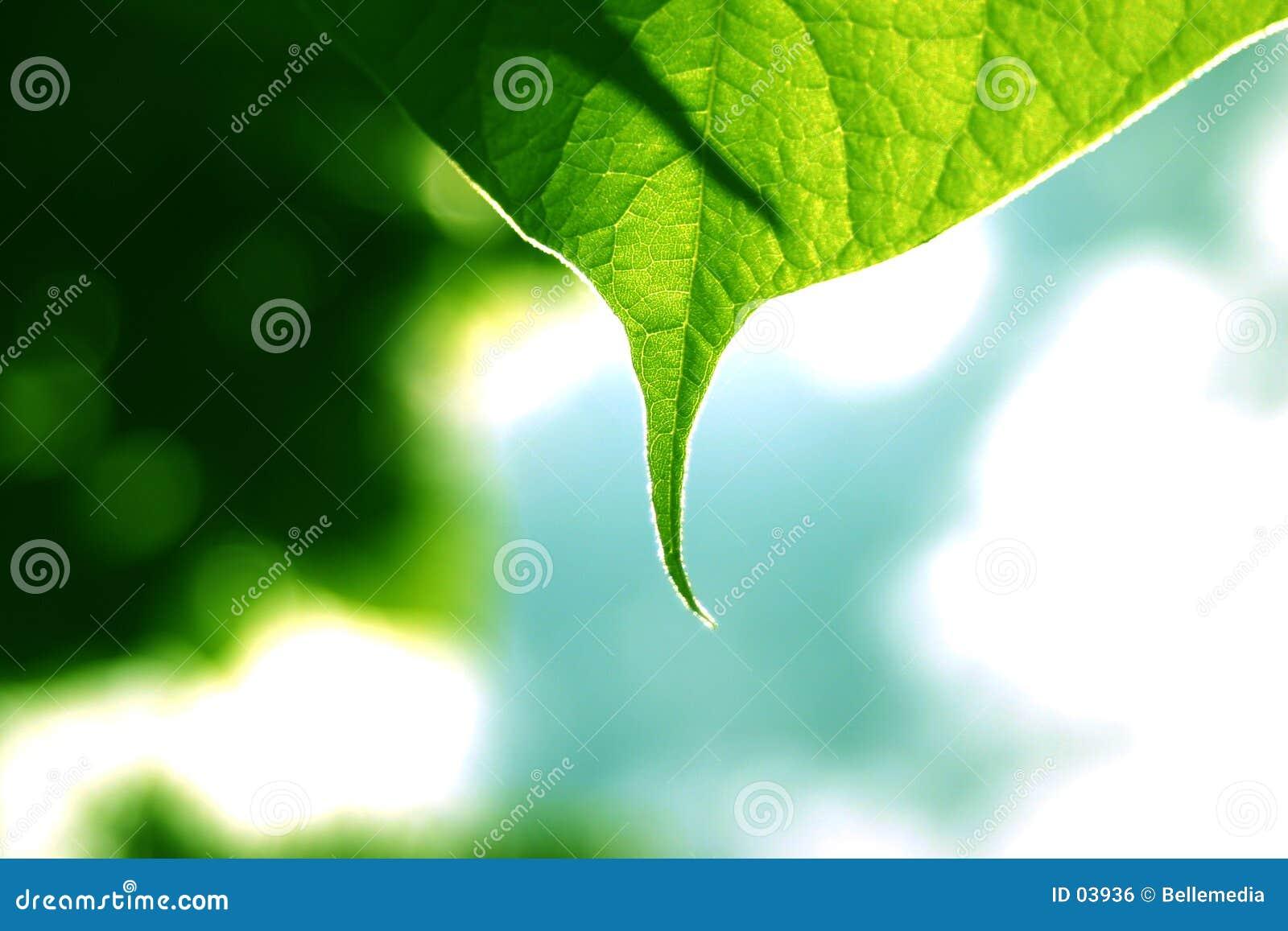 листья детали