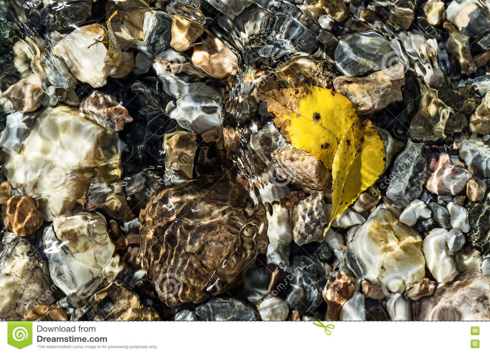 Листья желтого цвета на дне заводи