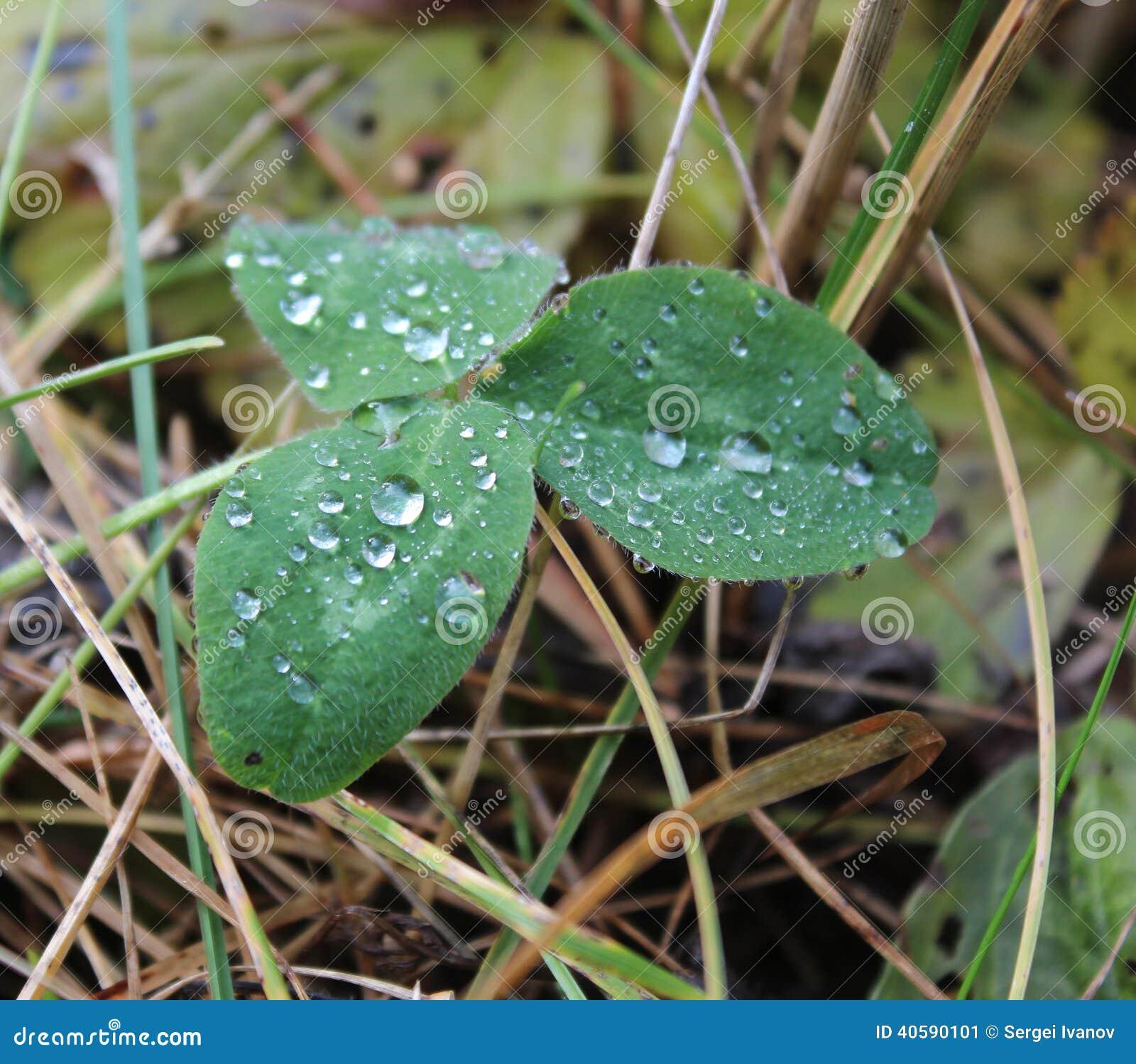 Листья заводов с капельками воды