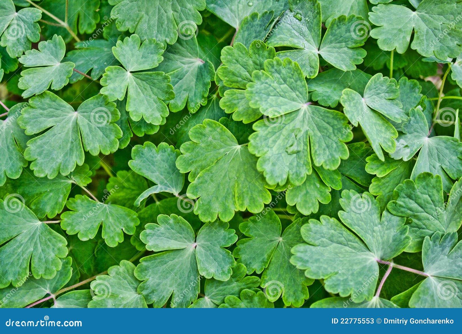 листья зеленого цвета