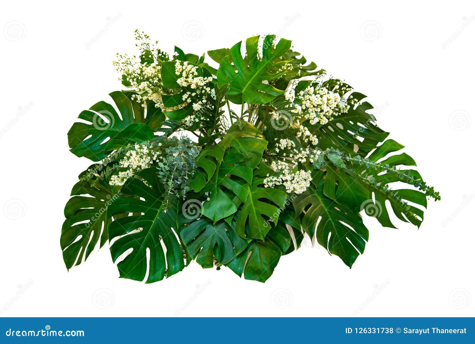 Листья изверга используемые в заводе листвы листьев современных дизайнов тропическом bush изолированный фон природы цветочной ком