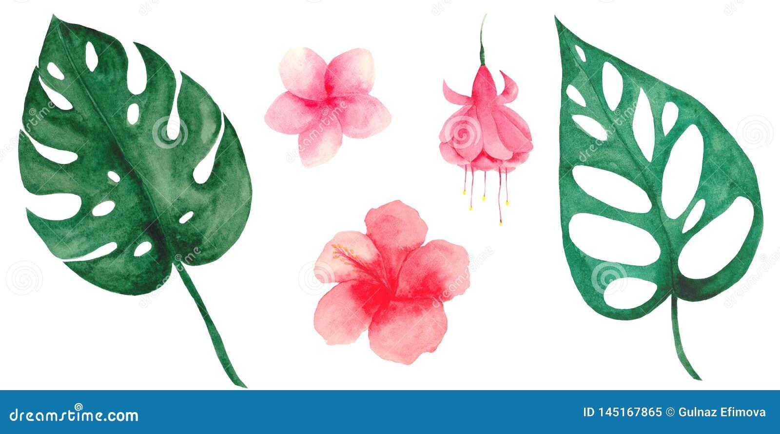 Акварель установила с тропическими листьями и цветками