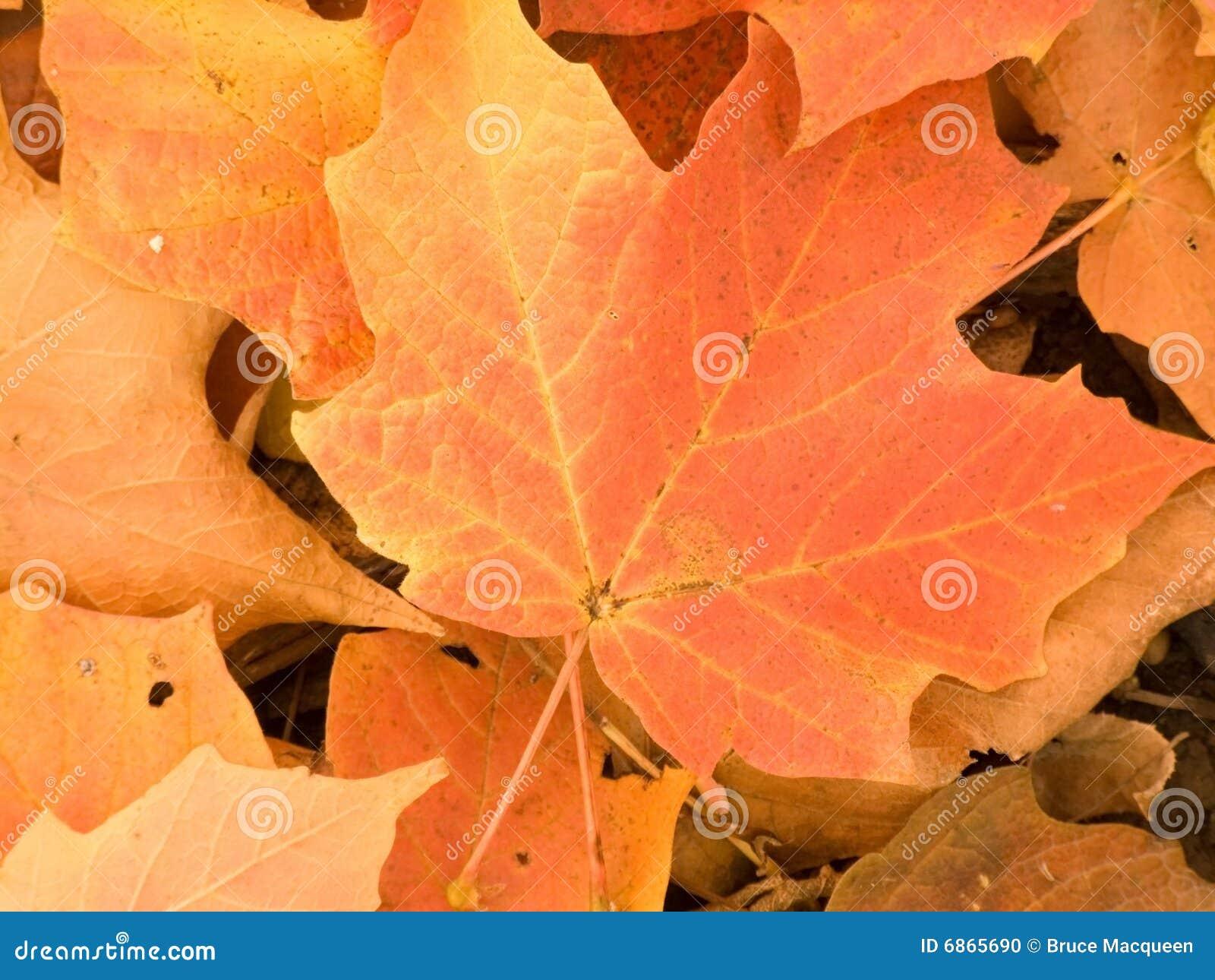 листья крупного плана осени