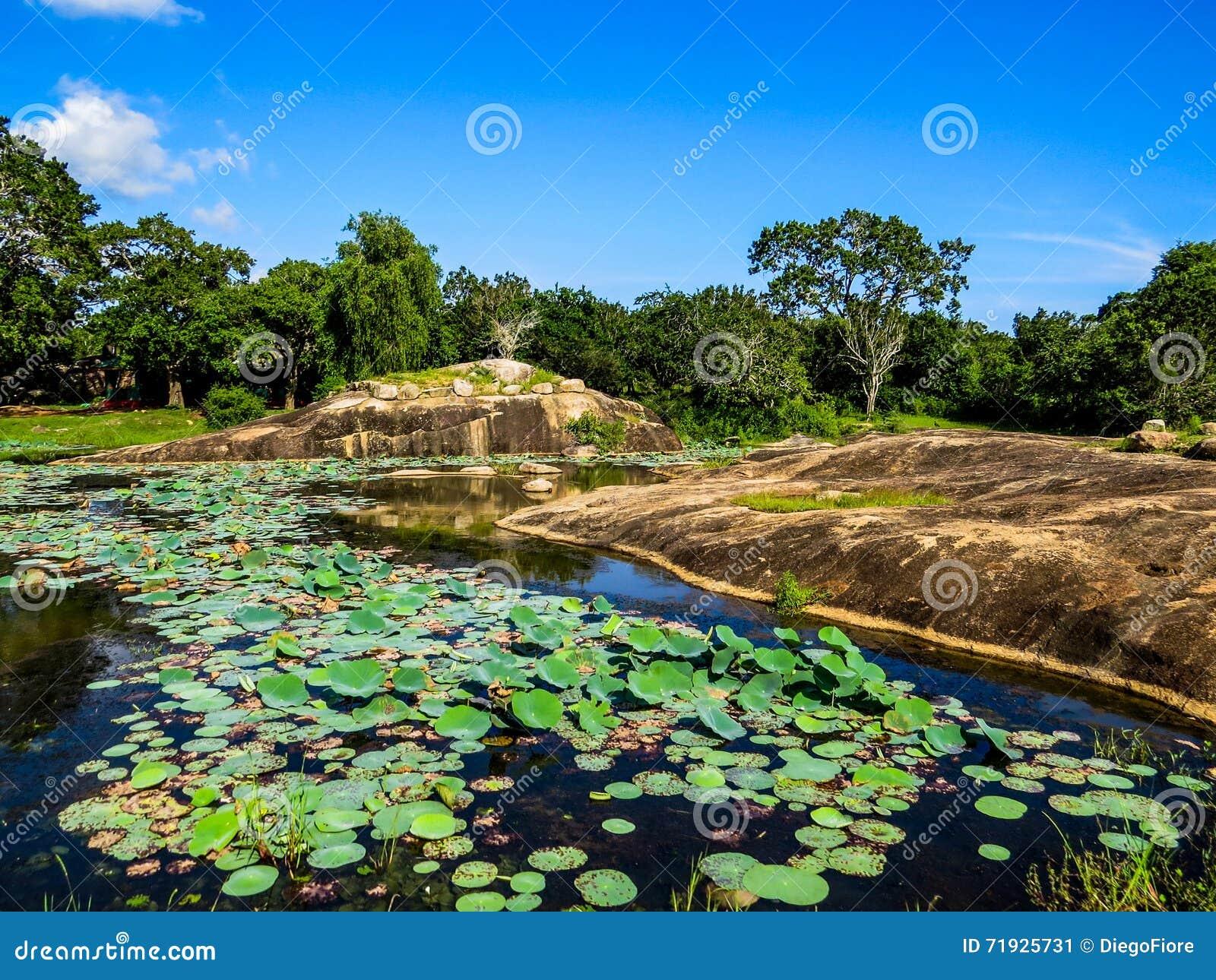 Листья на озере