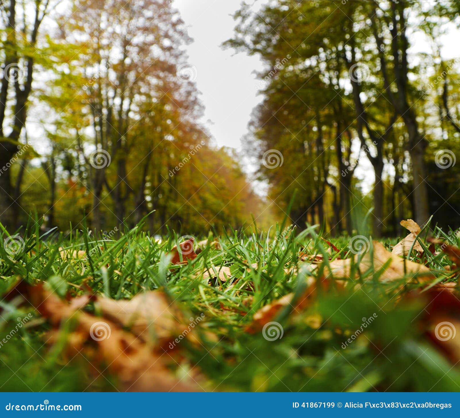 Листья осени в Каталонии