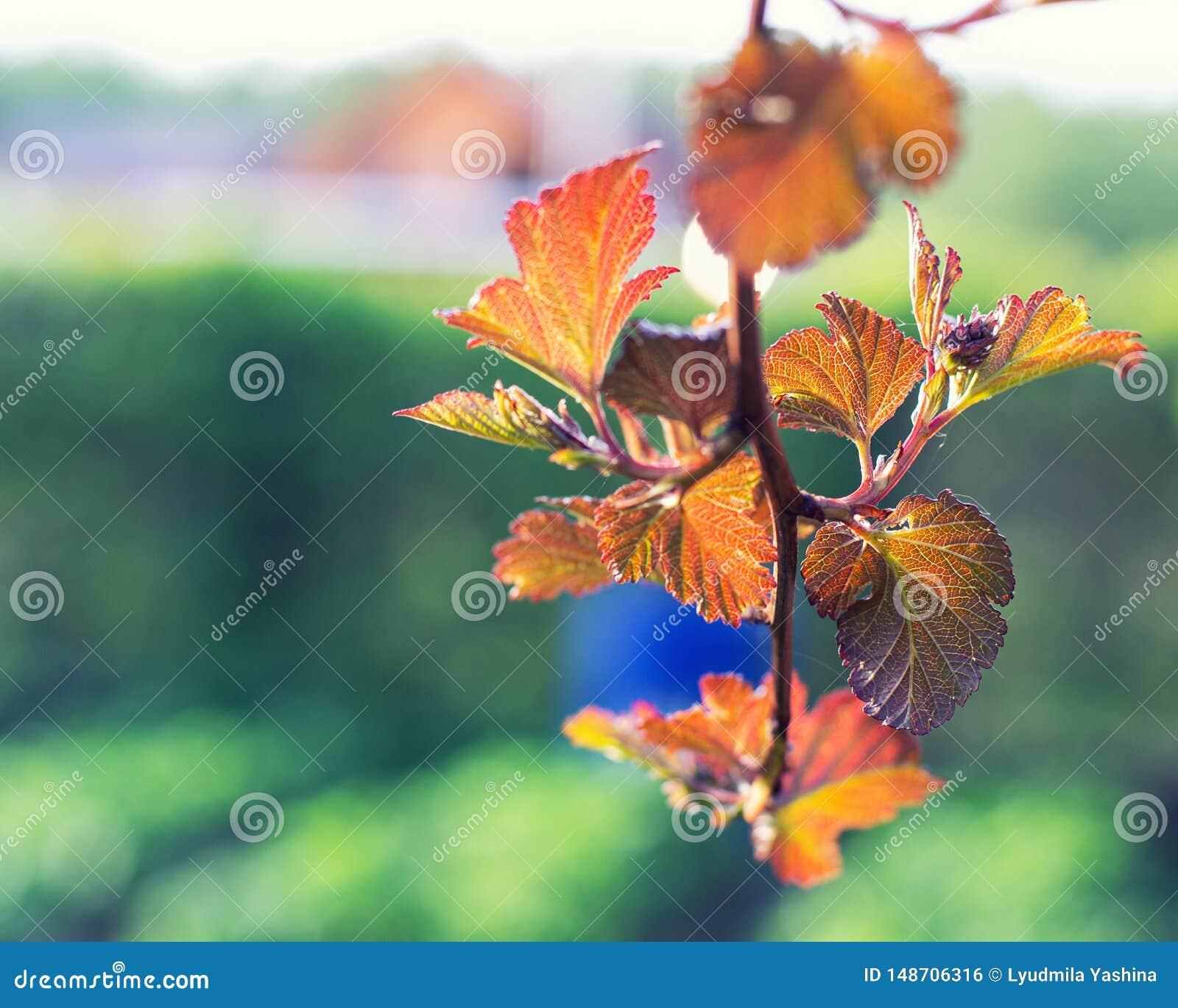 Листья осени в саде