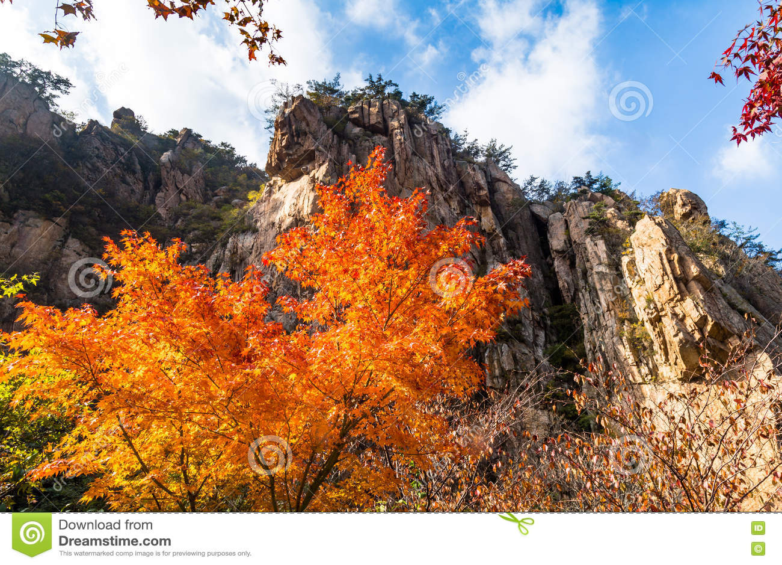 Листья осени в Bei Jiu Shui отстают, гора Laoshan, Qingdao, Китай