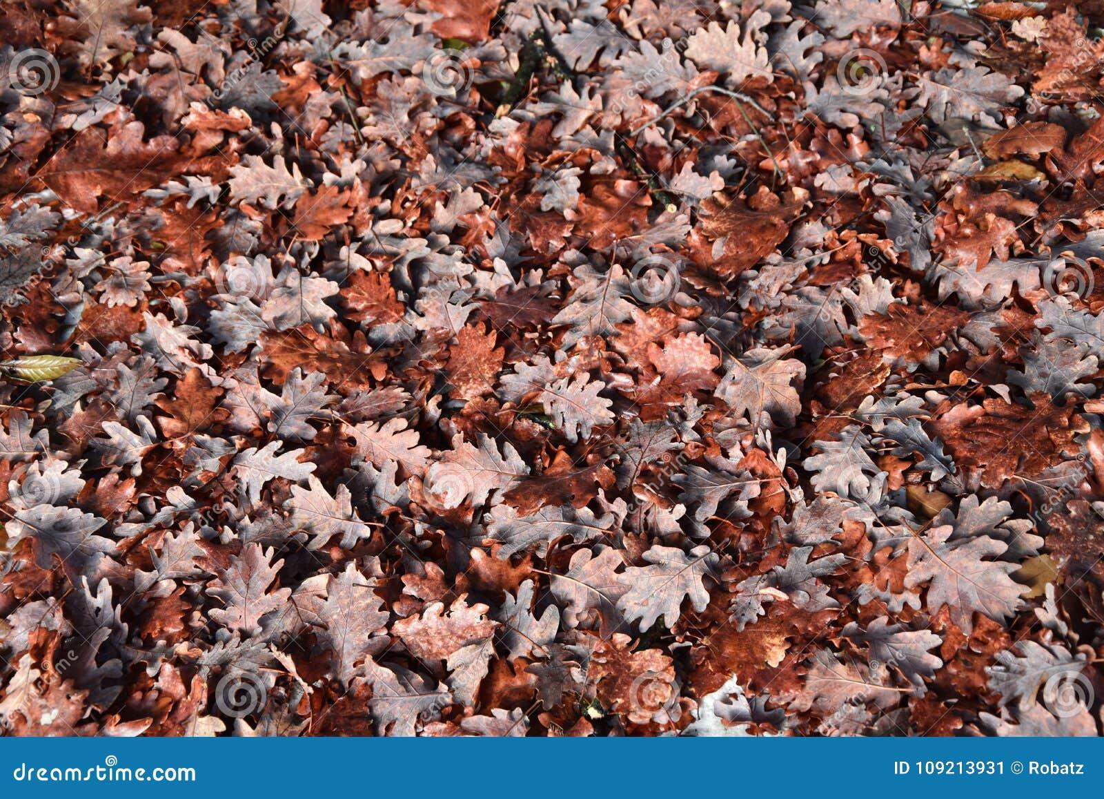 Листья осени падая от дерева backhander