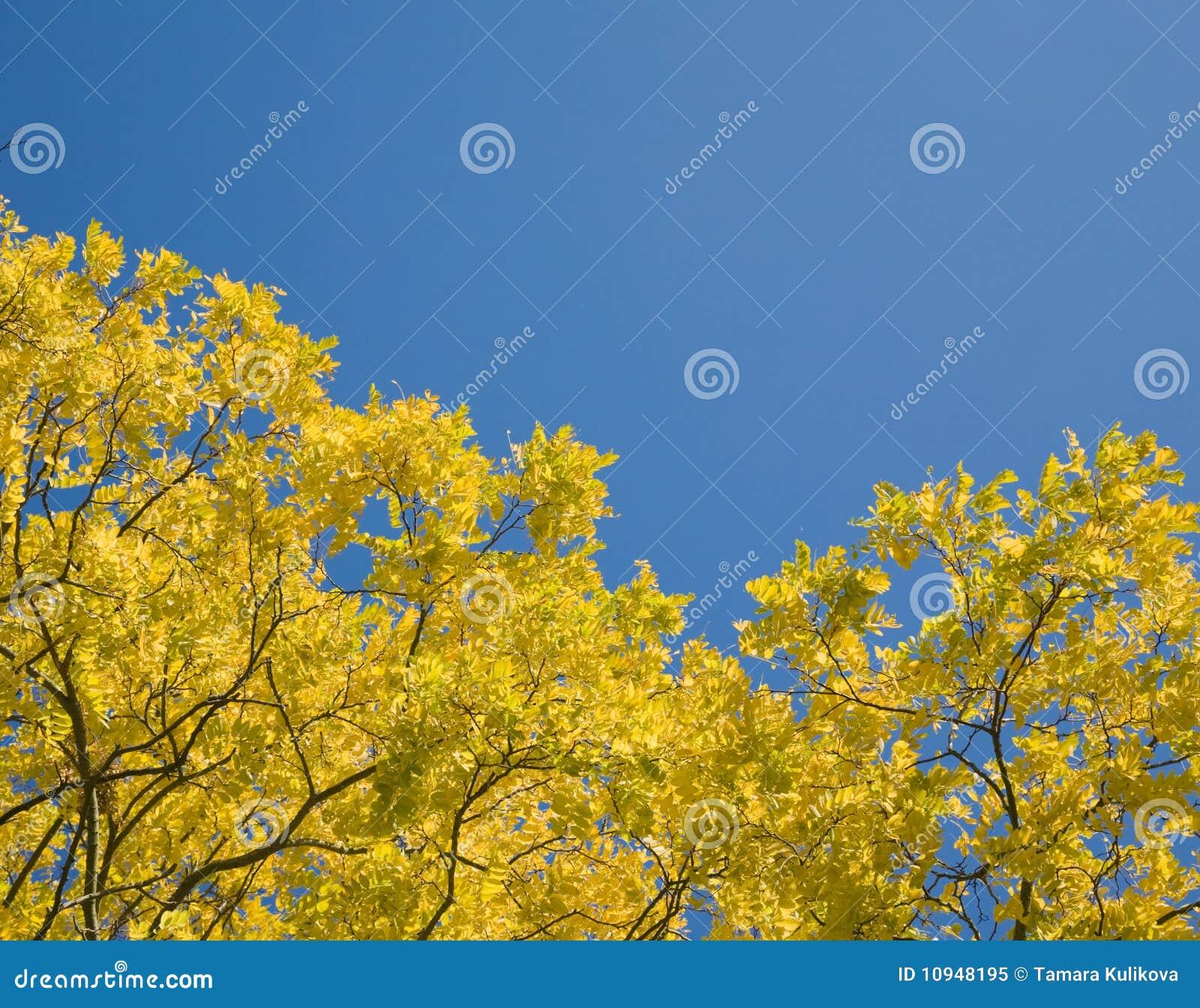 листья осени светя солнцу