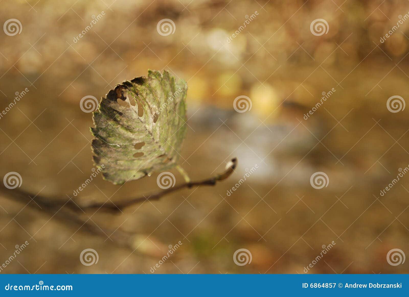 листья осени сиротливые