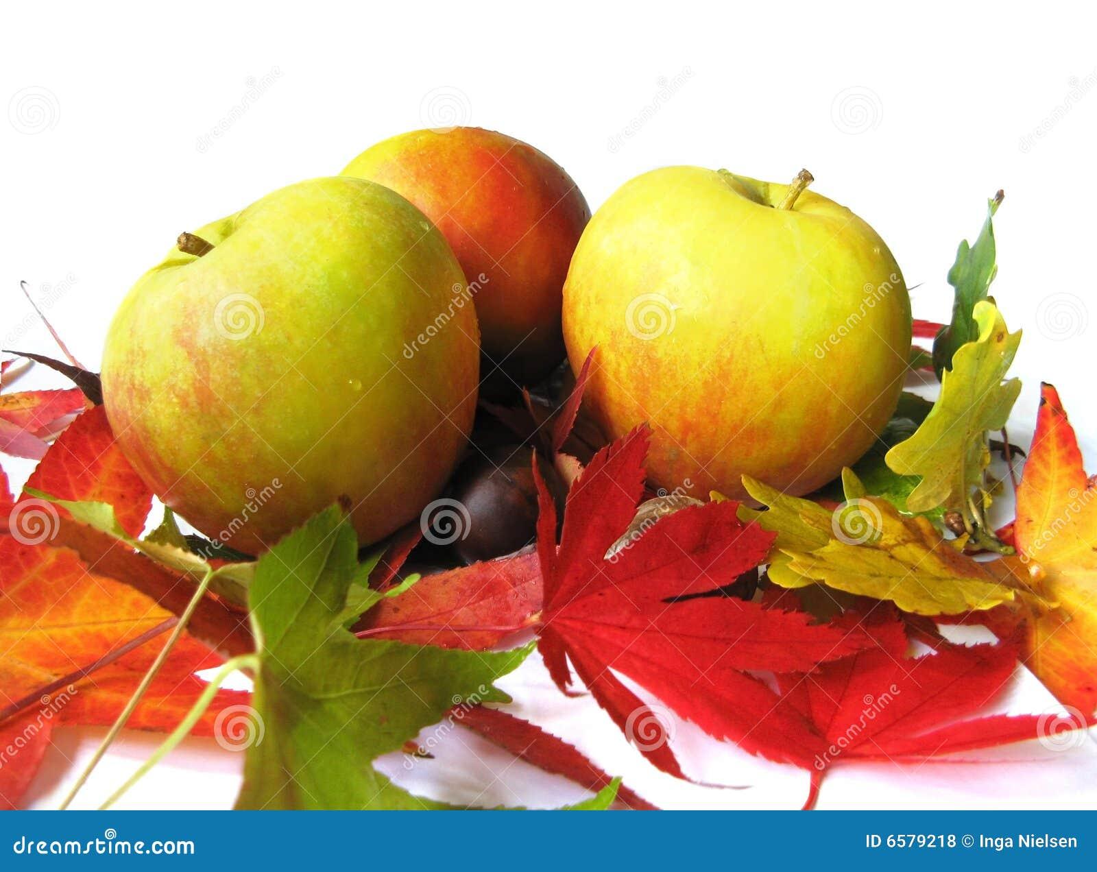 листья осени яблок