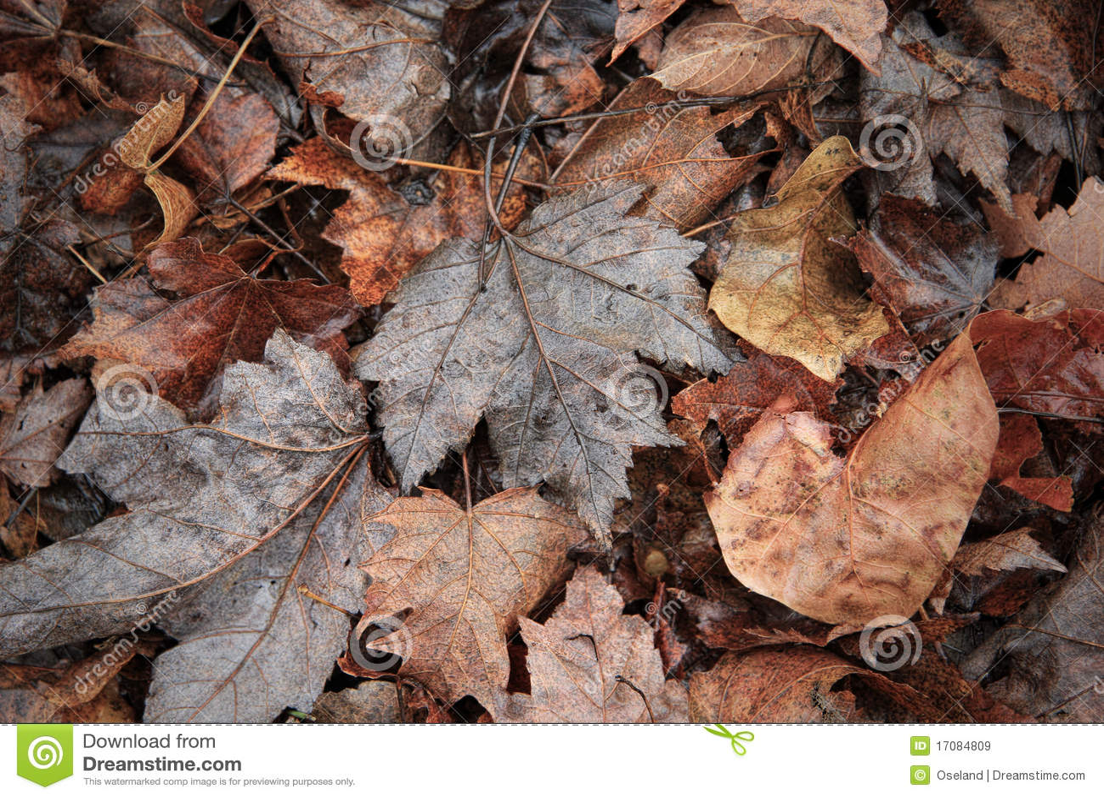 листья осени