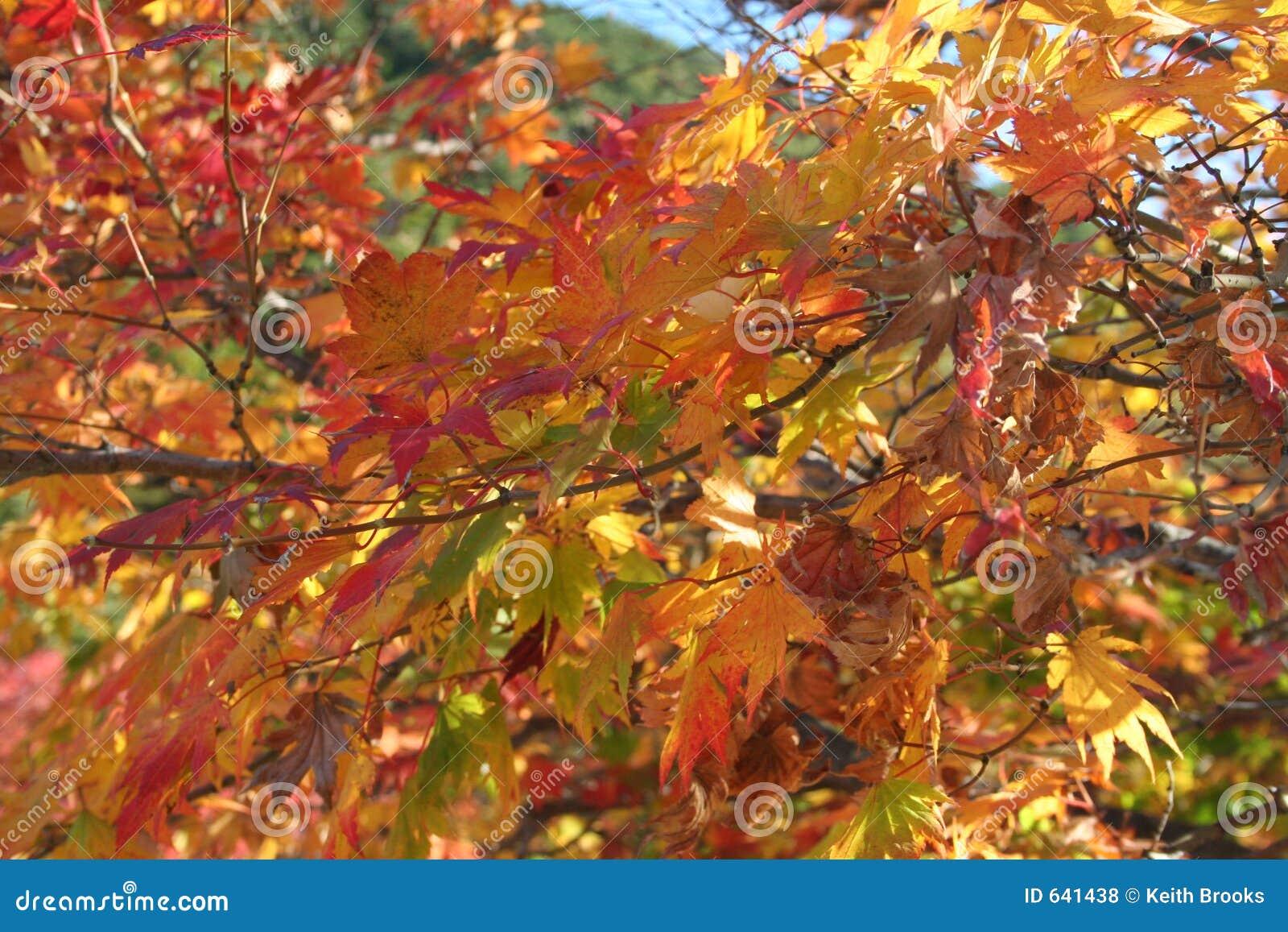 Download листья осени стоковое фото. изображение насчитывающей цветы - 641438