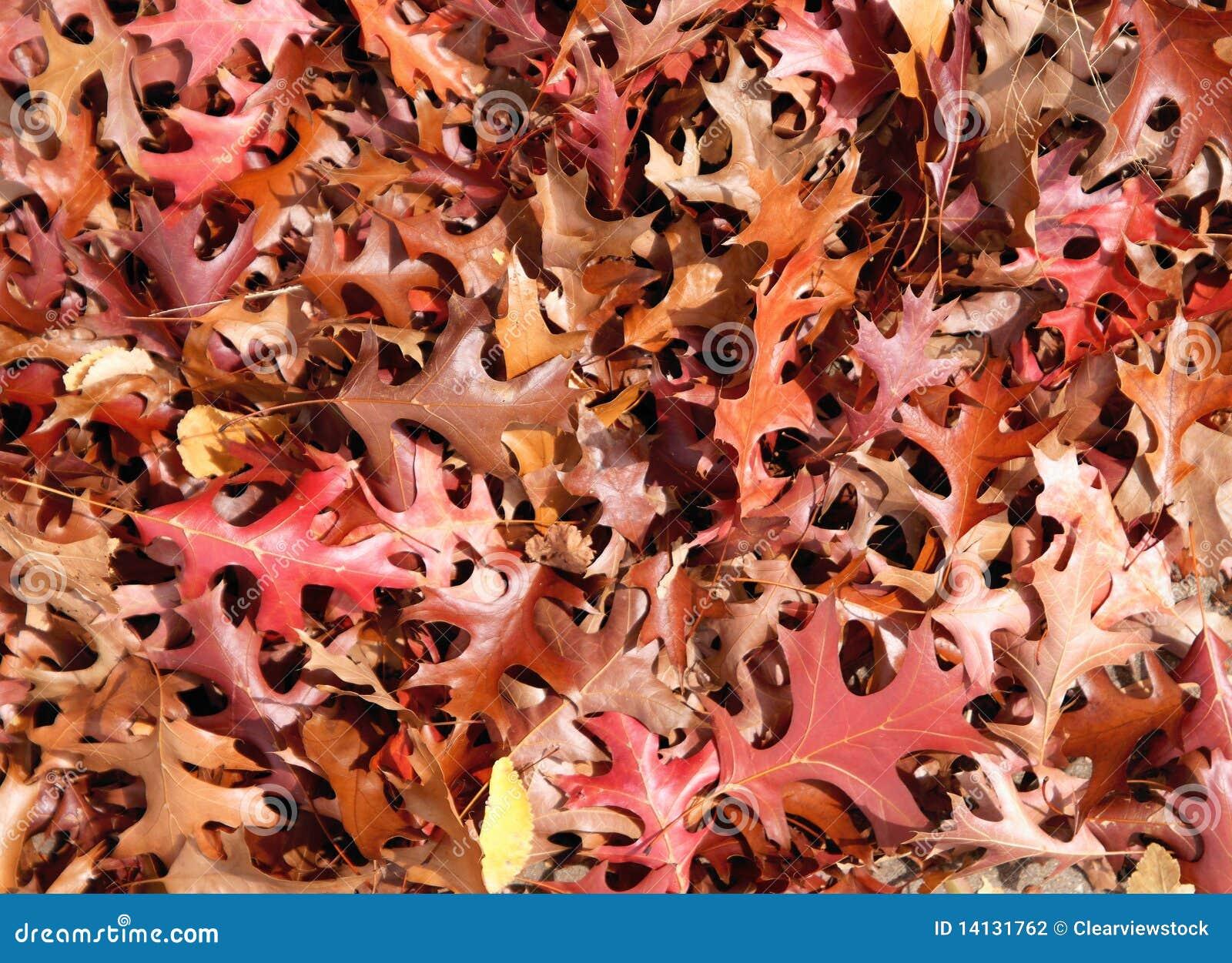 листья падения предпосылки осени