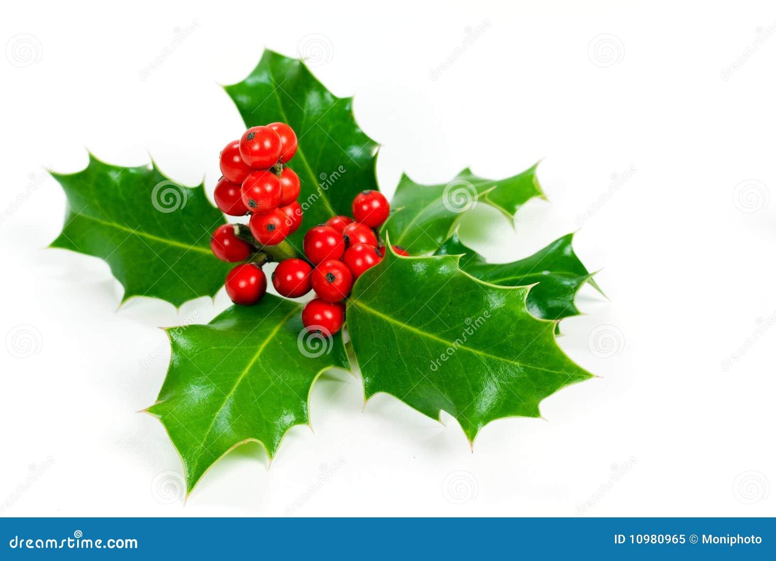 листья падуба украшения рождества ягод