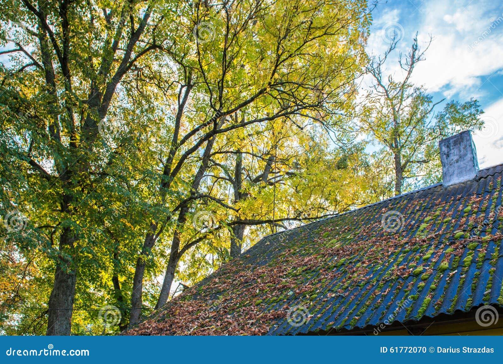 Листья падения на крыше
