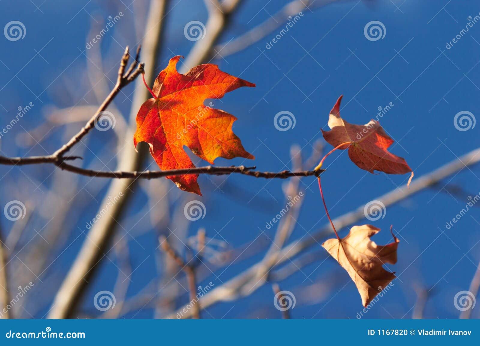 листья последнего