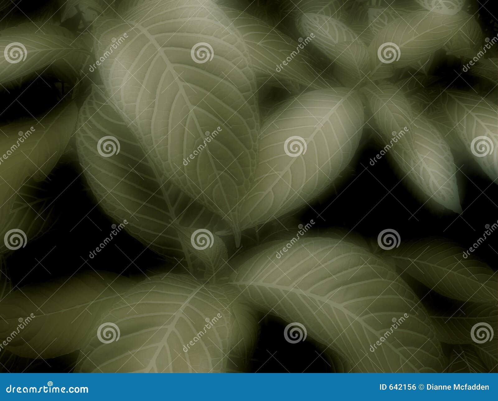 Download листья предпосылки стоковое фото. изображение насчитывающей листья - 642156