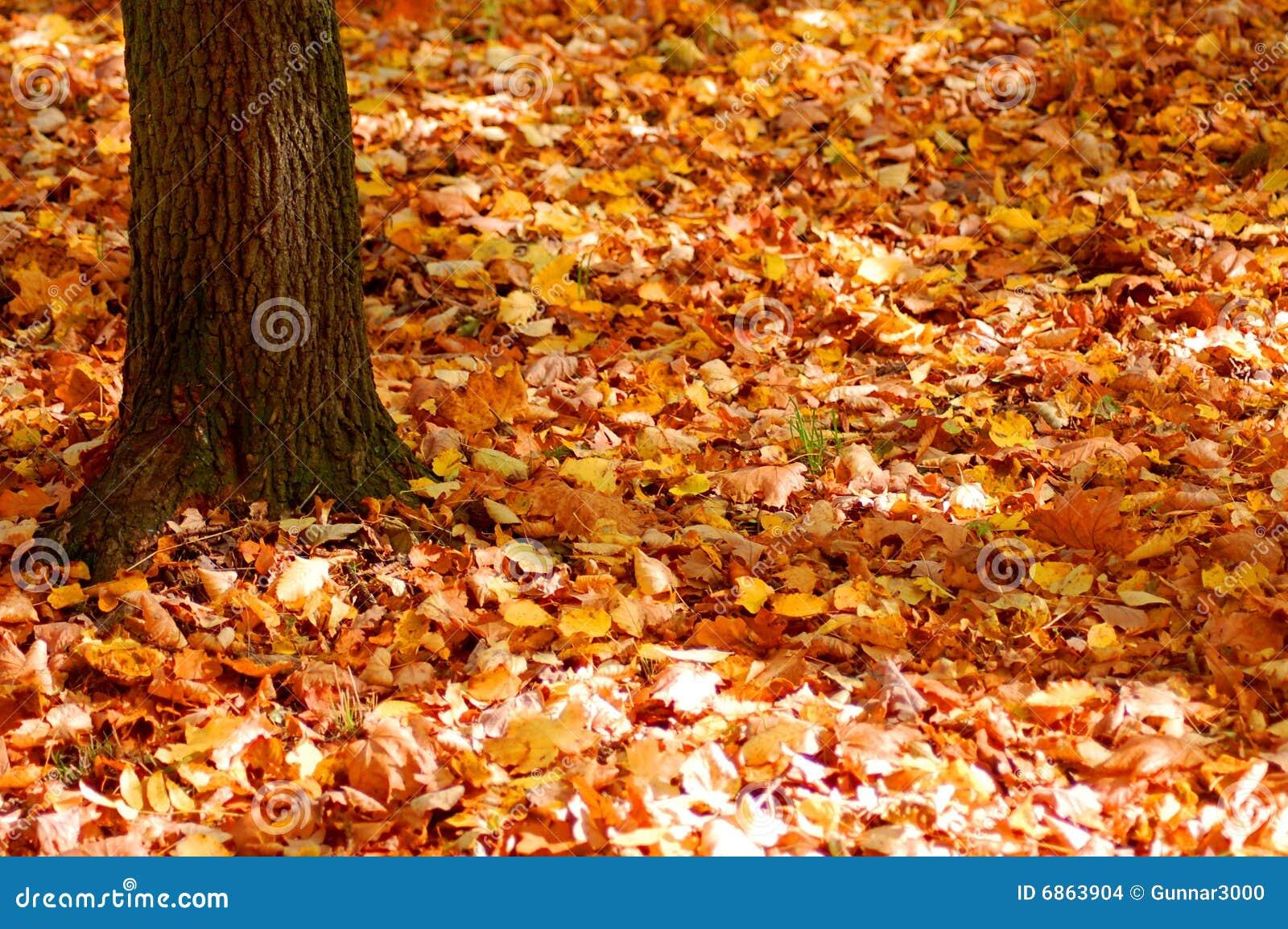 листья сада пущи падения золотистые