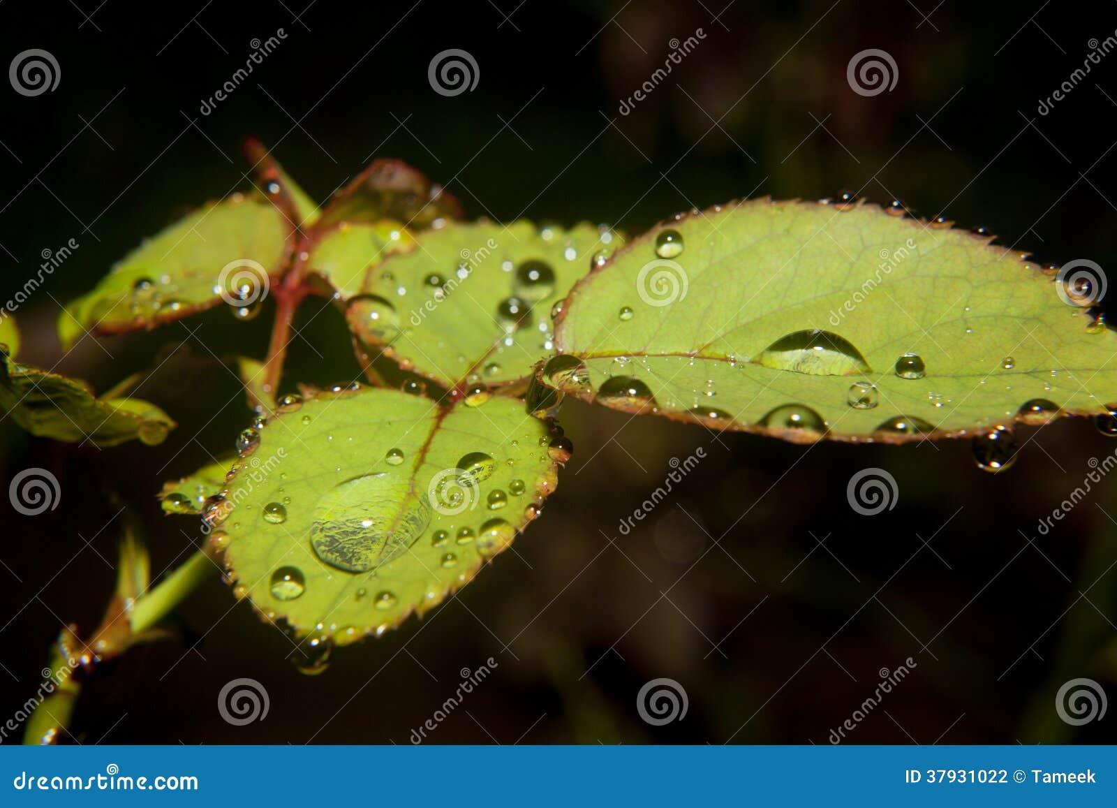 Листья с падениями воды