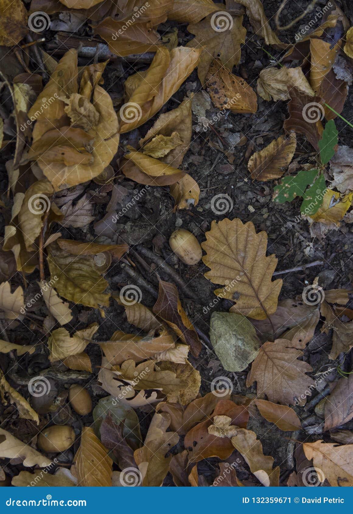 листья упаденные осенью