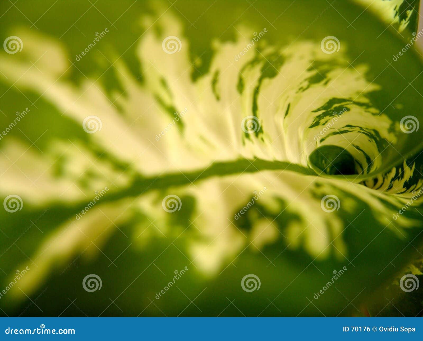 листья цветка