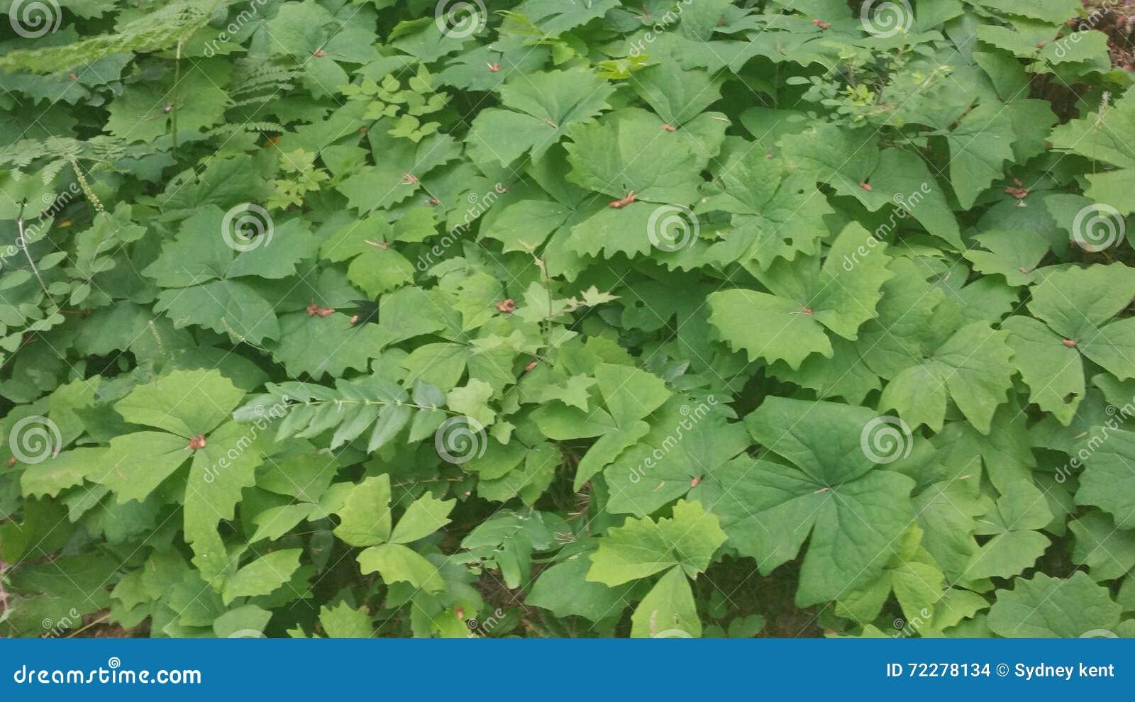Download Листья стоковое фото. изображение насчитывающей листья - 72278134