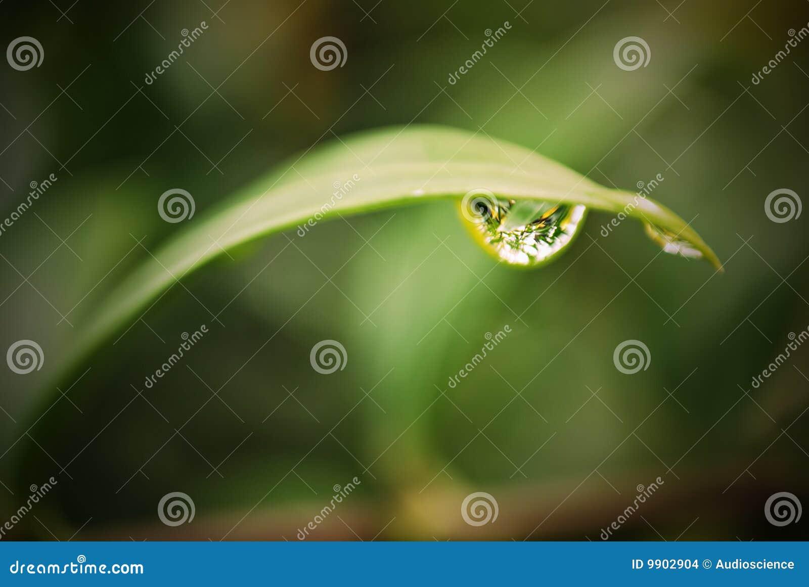 листья dewdrop