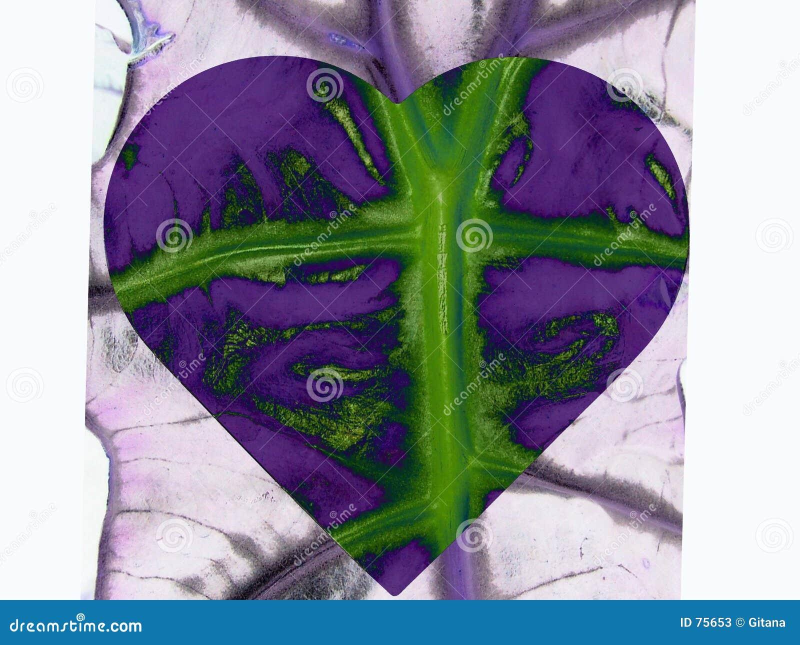 лист сердца