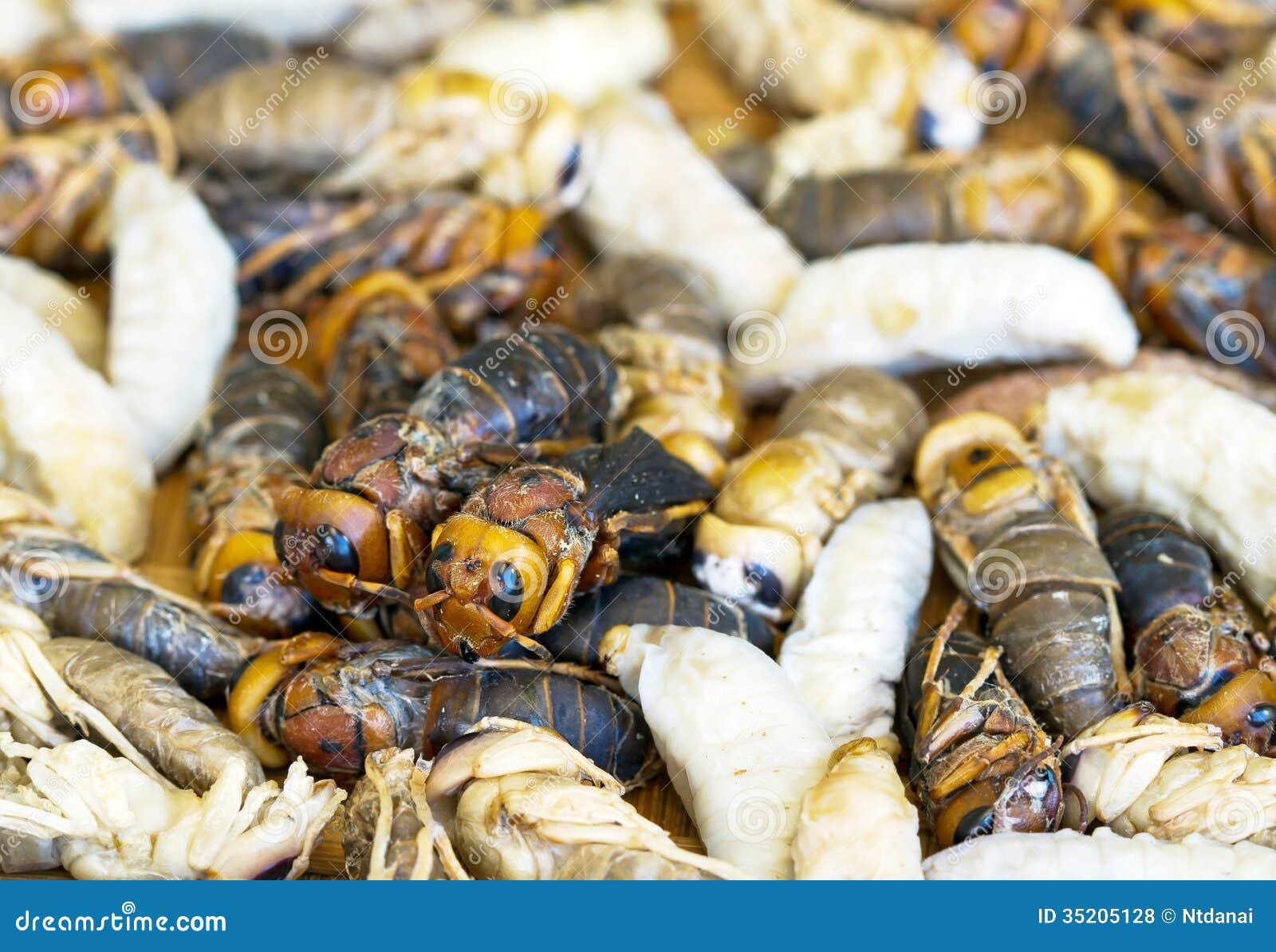 Личинка пчелы