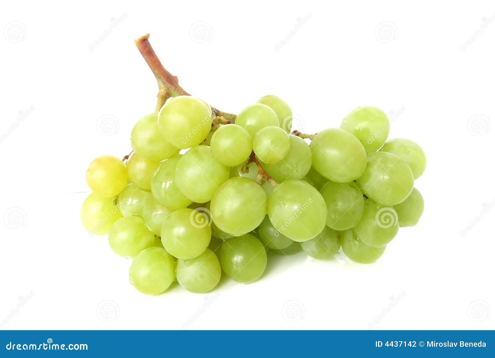 лоза виноградины