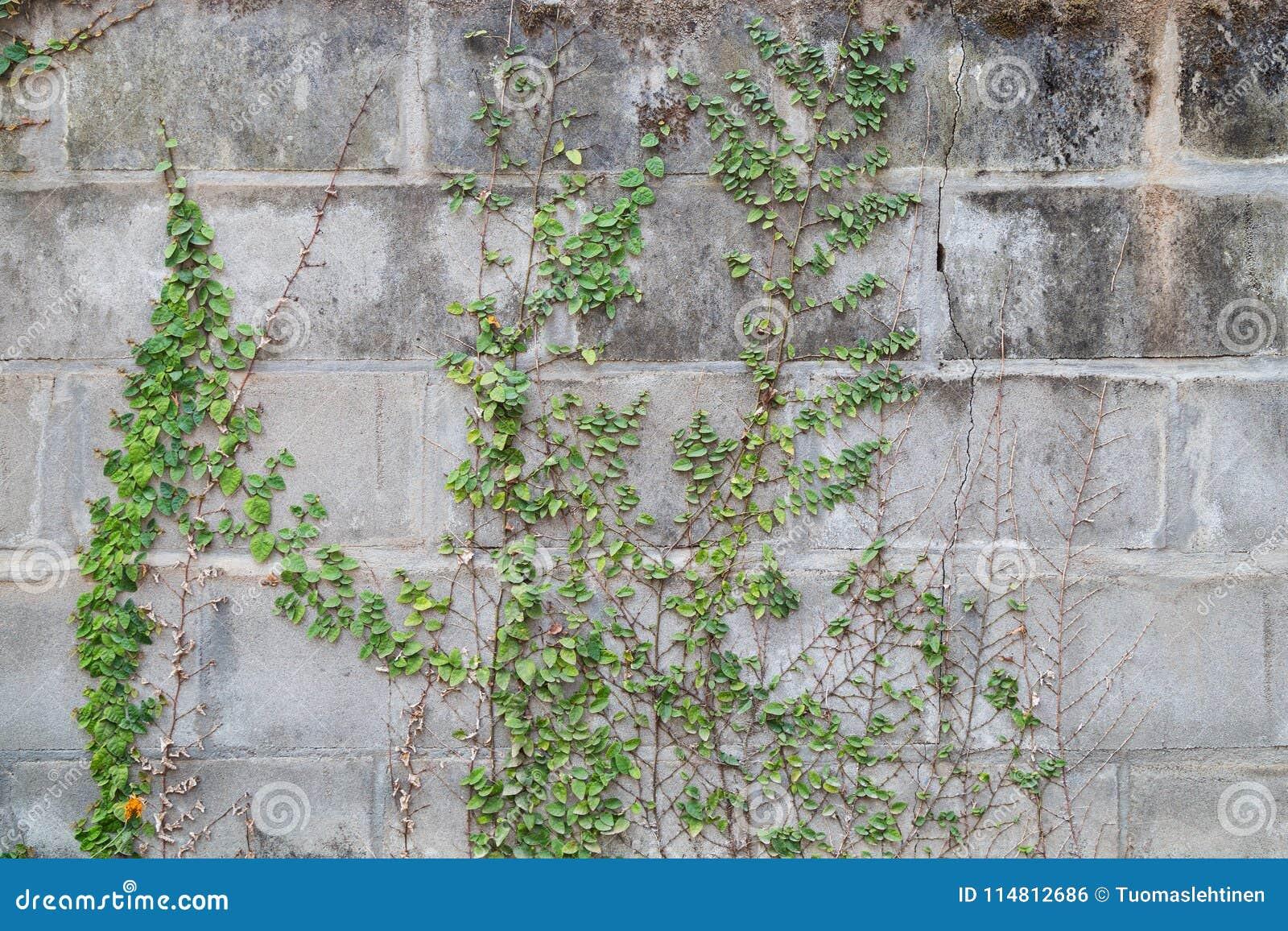 Бетон лоза купить бетон в шелехова цена