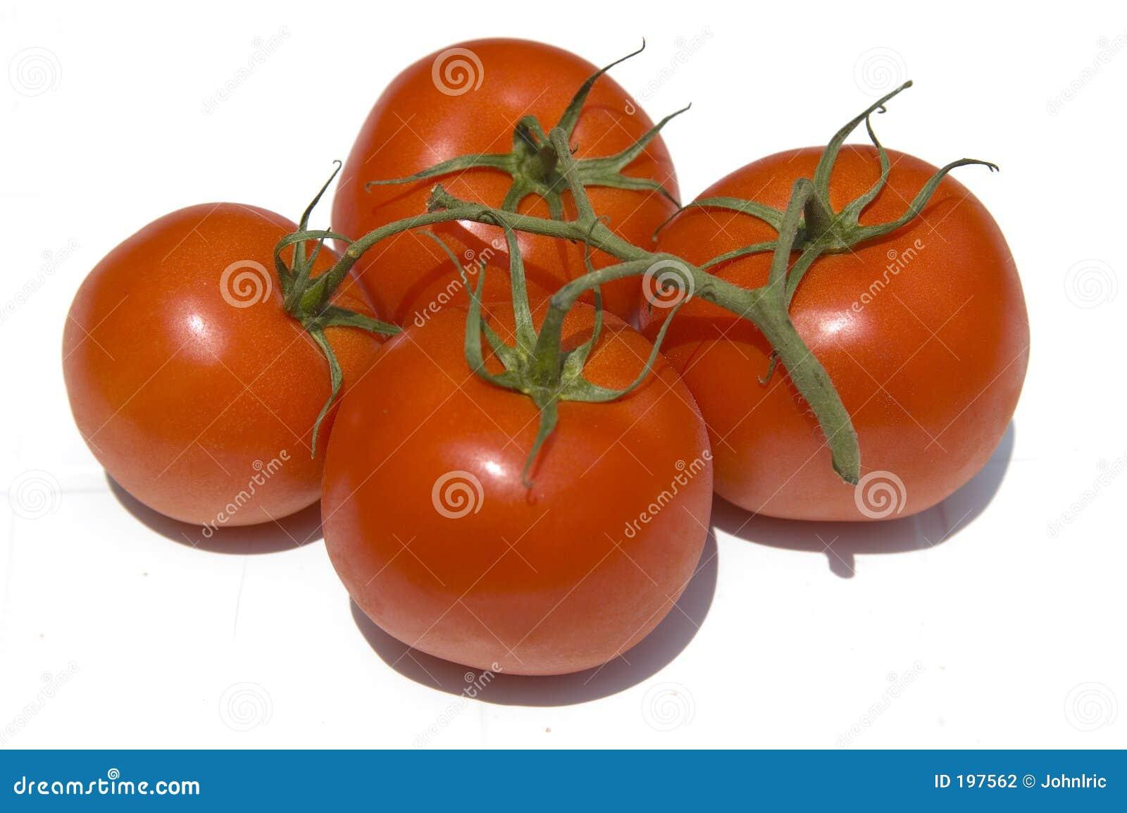 лоза томатов