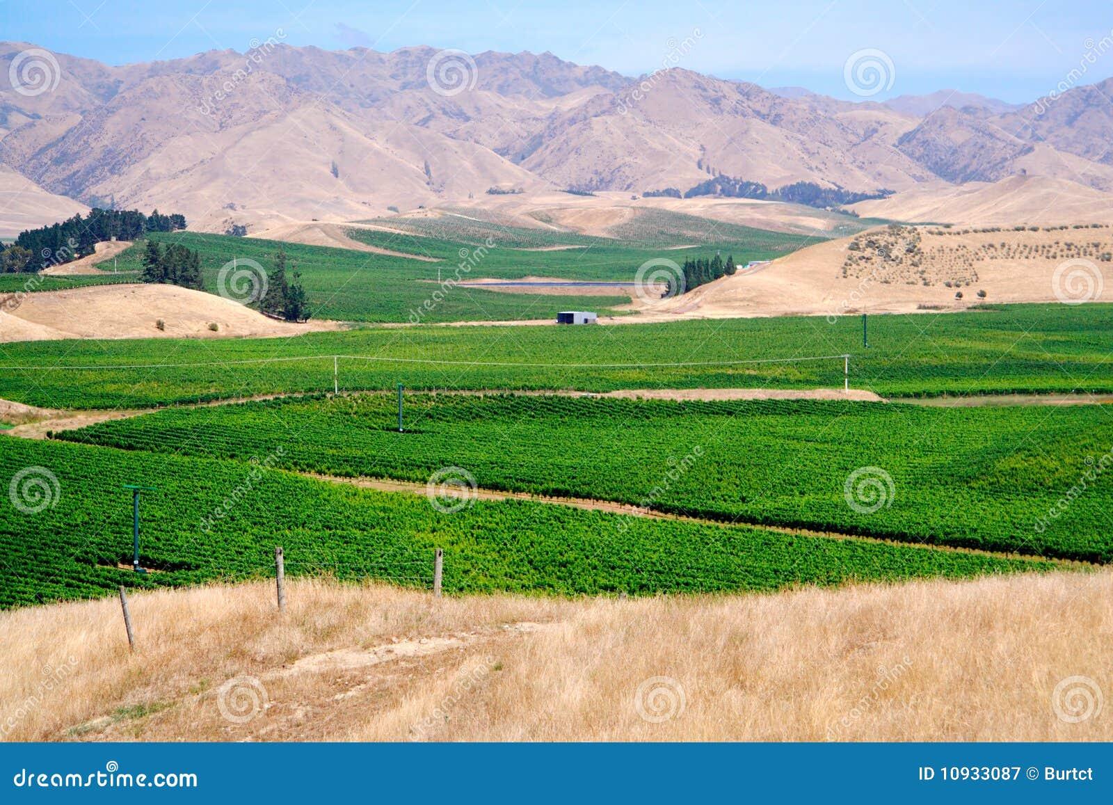лозы долины