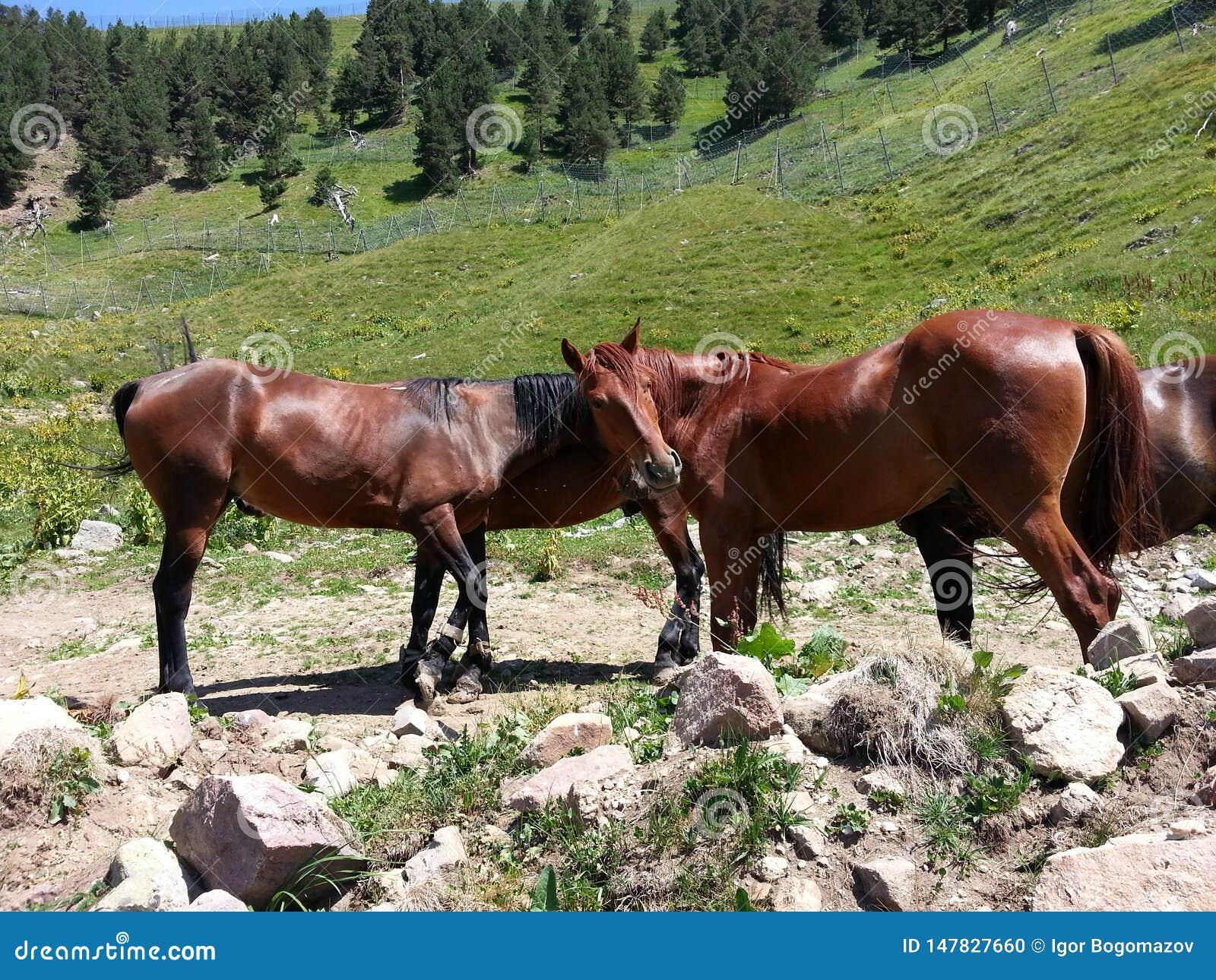 Лошади в дикой природе гор